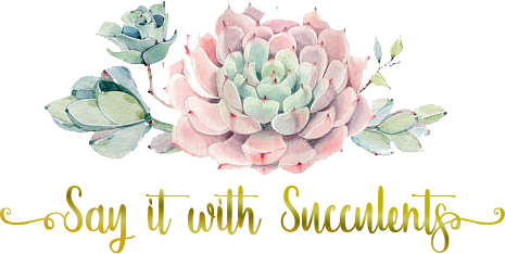say-it-with-succulents-transparent